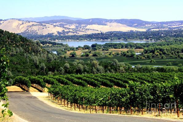 wine-country-california-gail-salituri