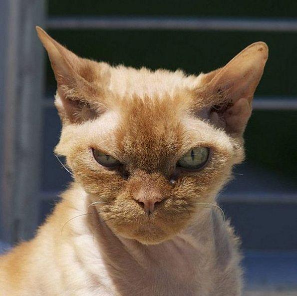 gatto-furioso1