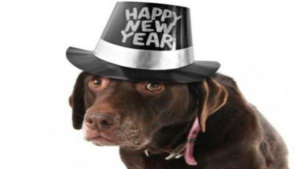 Capodanno-Strage-di-cani-e-gatti